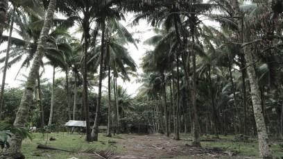 Family Farm Landscape