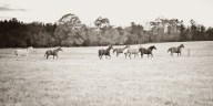 Urban Petals, Double J Arena, Pendleton, South Carolina, outdoor door wedding on horse farm