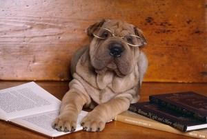 puppy reading
