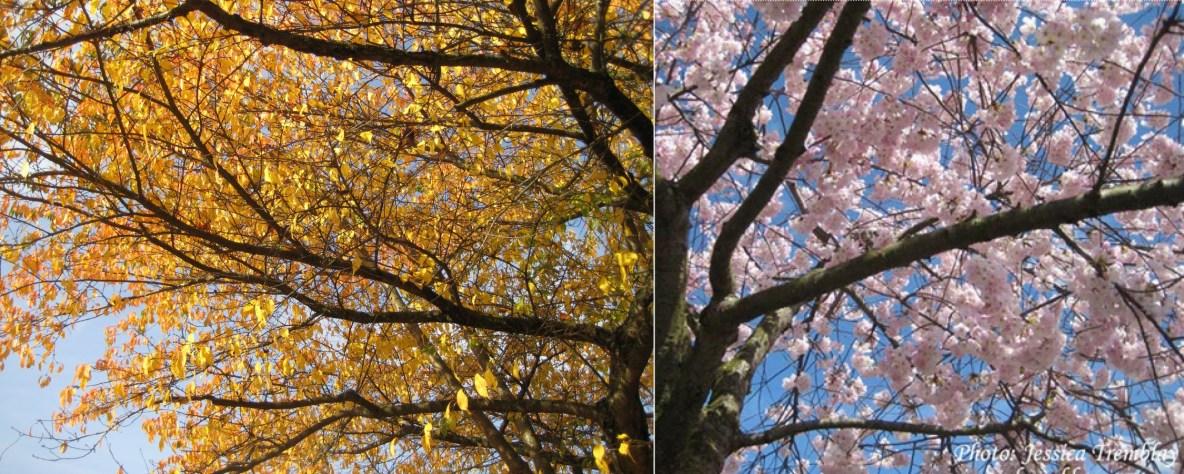 springautumnhalftree
