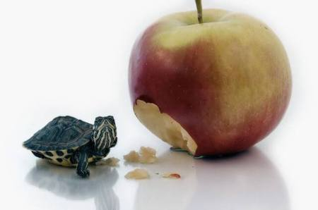 turtle and apple