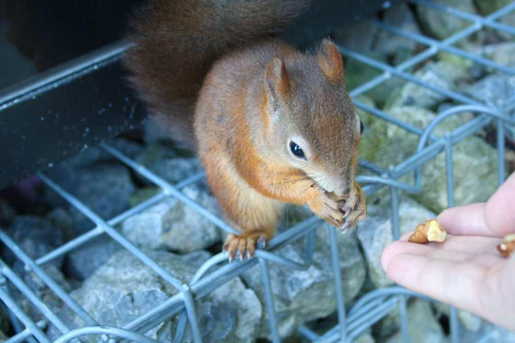 Голодная белка Венский маршрут Венский маршрут vienna schonbrunn gardens squirrel
