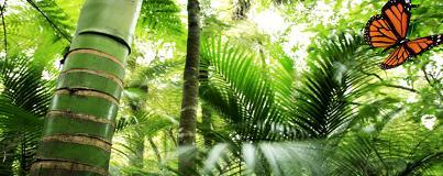 El Bosque Virtual