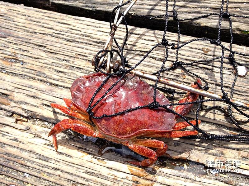 溫哥華旅遊|蟹肥秋意濃,溫哥華捕蟹正是時候