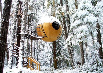 溫哥華旅遊 造訪球型樹屋,在林海間載浮載沉