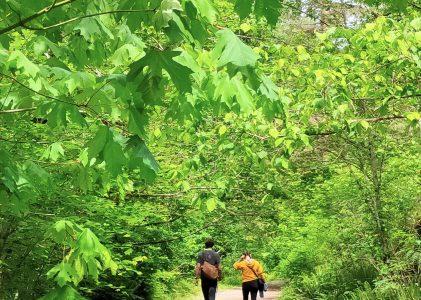 溫哥華旅遊|春天的河邊步道 Coquitlam River Trail