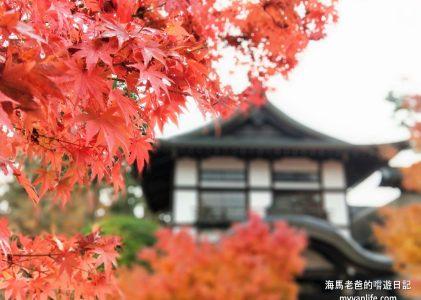 京都旅遊|太慢了喔,永觀,佛陀如是說