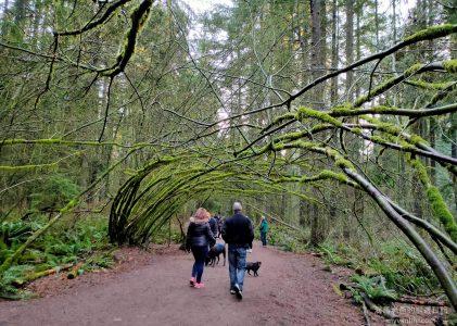 溫哥華旅遊|在與冬日夕陽玩捉迷藏的森林 Mundy Park