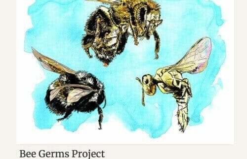 bee homeschool project