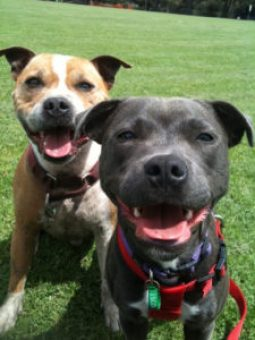 Tips For Choosing The Perfect Doggy Day Care