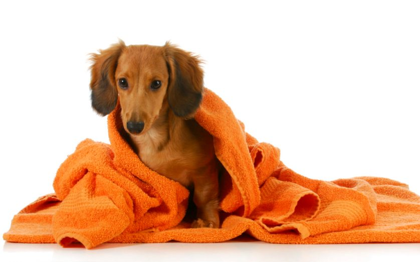Canine Grooming – The way you need to move approximately Grooming Your dog!
