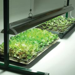 LED grow lights: The technology is taking over Sunlight