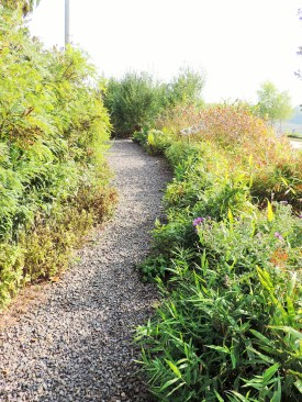 The garden on the riverbank with tall, fast growing plants.