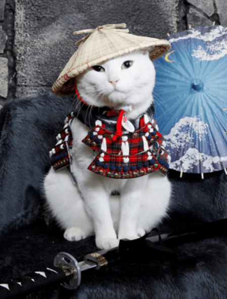 Dogs and Cats dressed as Samurai
