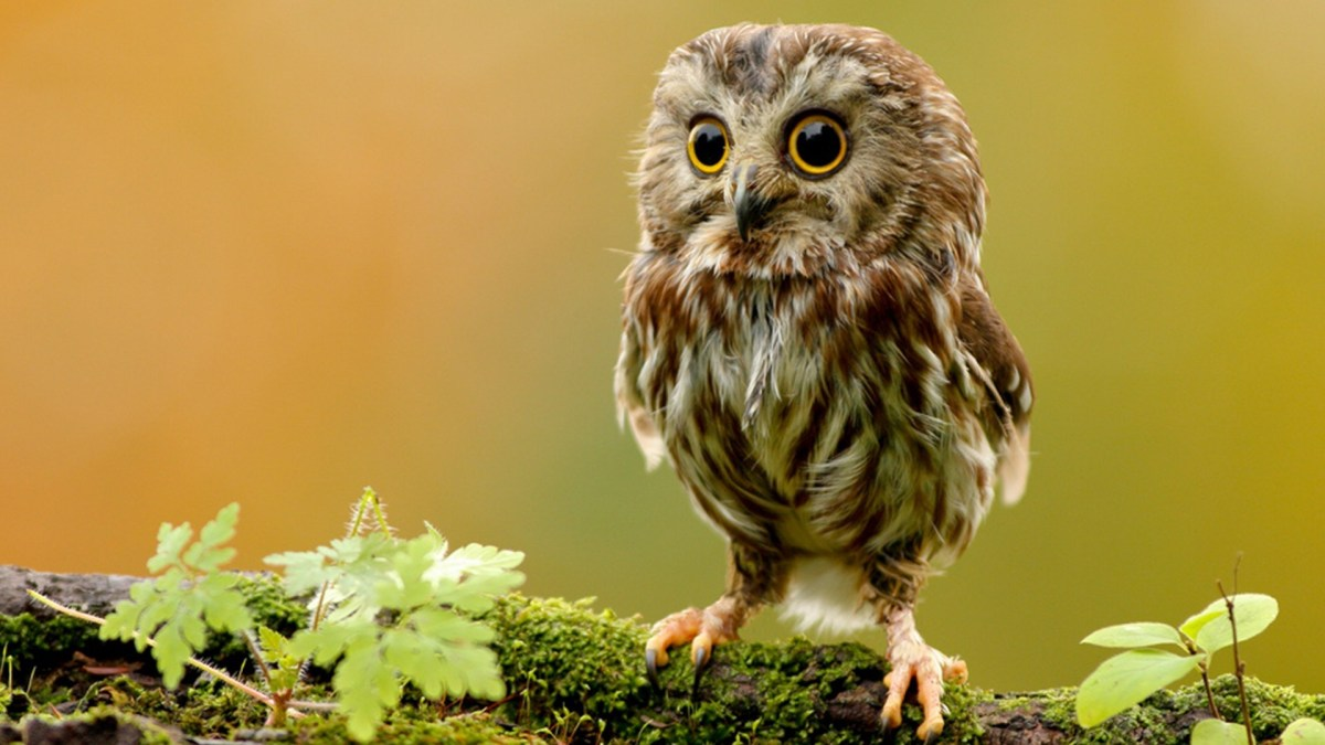 Cute pet Owl video compilation