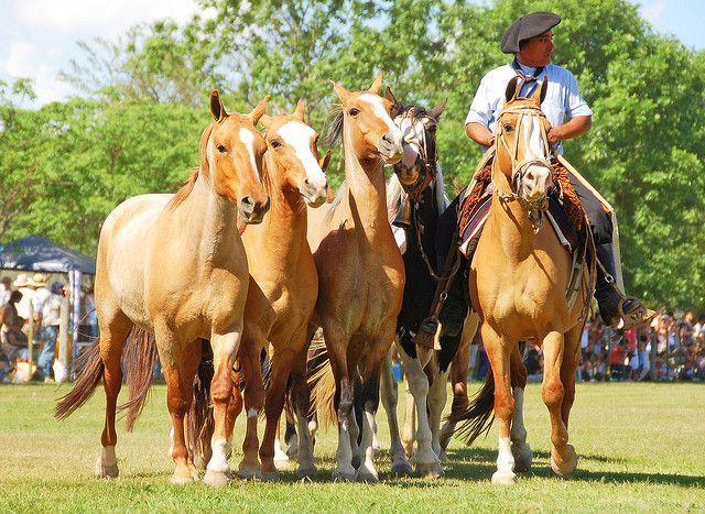 Breeders: Criollo Horse