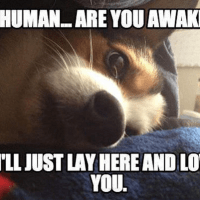Cute dogs waking up their humans