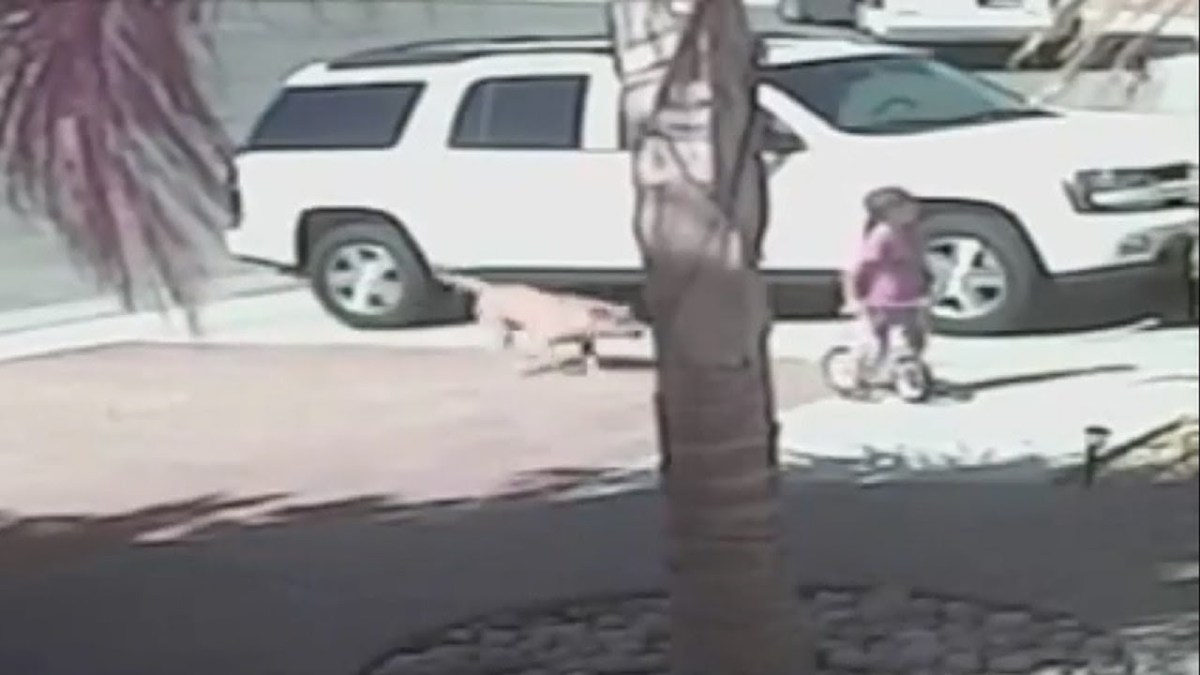 This hero cat saves child from a dog attack!