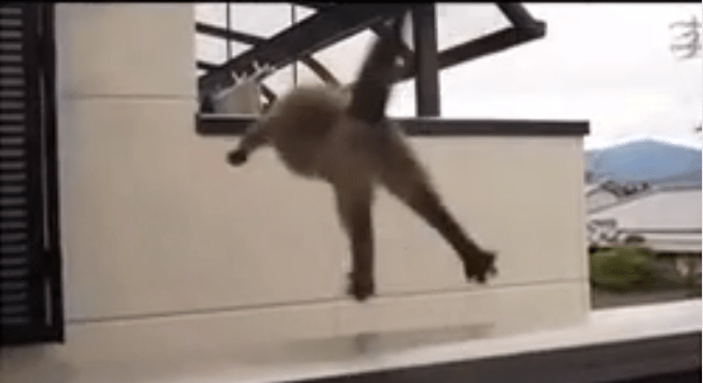 "This cats ""failing"" at jumping are too funny to be true!"