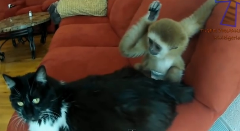These monkeys annoying other animals will make your day