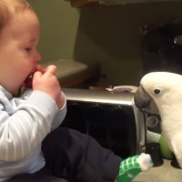 This baby shares his snacks with a cockatoo!