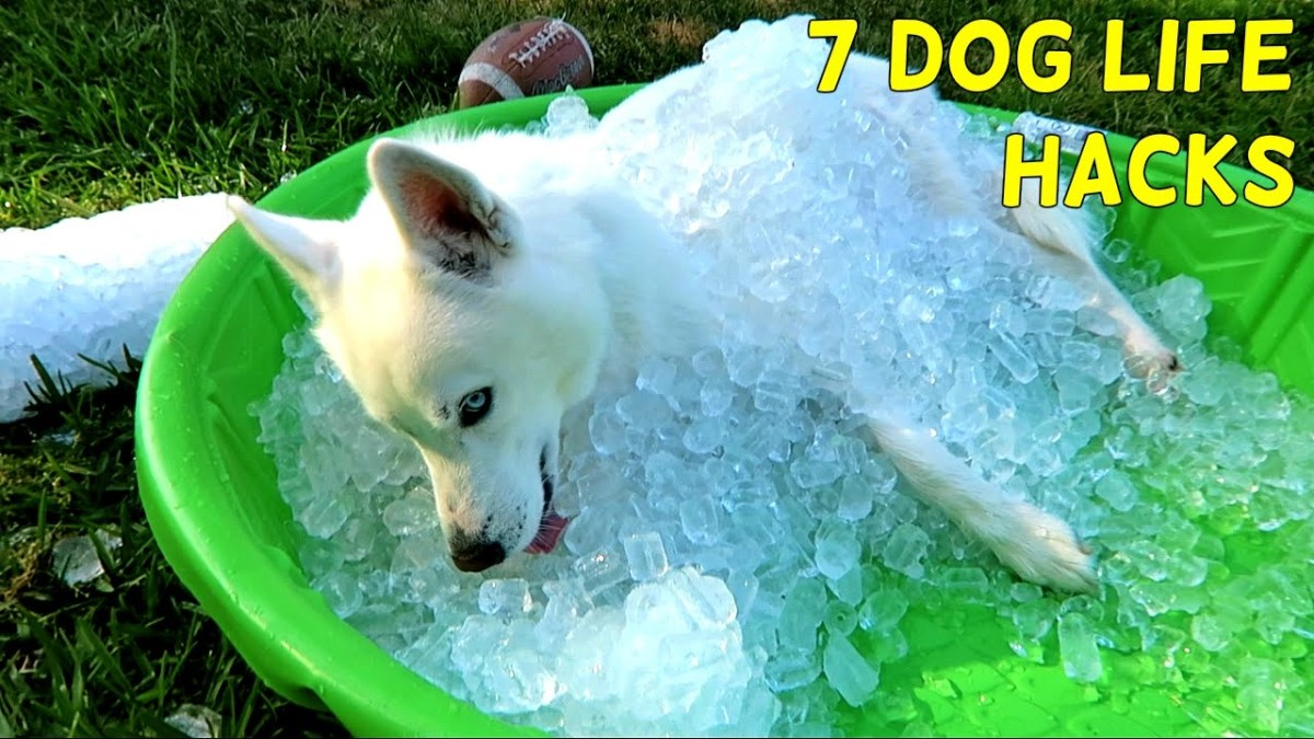 These life hacks for your dog will make things easier!