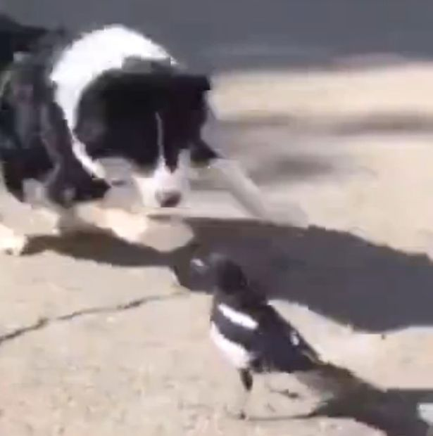 You Need To Check Out This Unvelibable Friendship Between A Dog And A Bird Caught On Camera