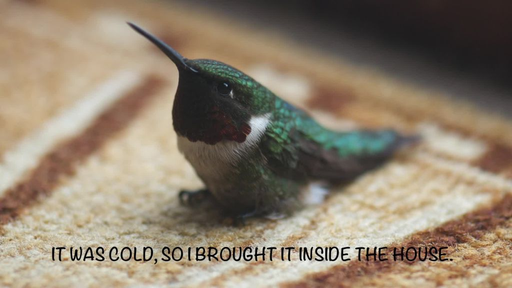 Woman Rescues Hummingbird In Her Backyard