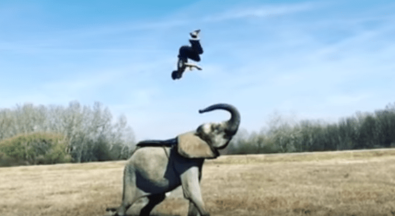 Guy Runs Up Elephant and Flips Onto His Back
