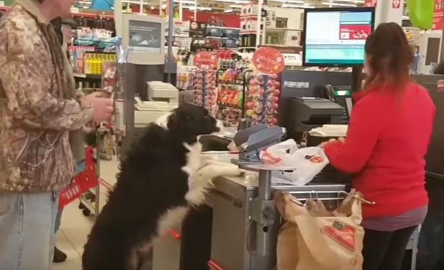 Clever Dog Picks Out His Own Treats At Store And Pays For Them Too
