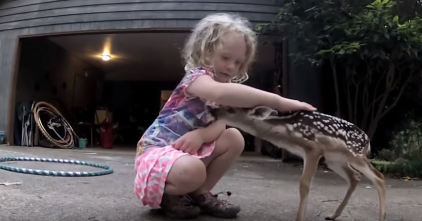 Beautiful Moment Betwen A Wild Deer And A Little Girl