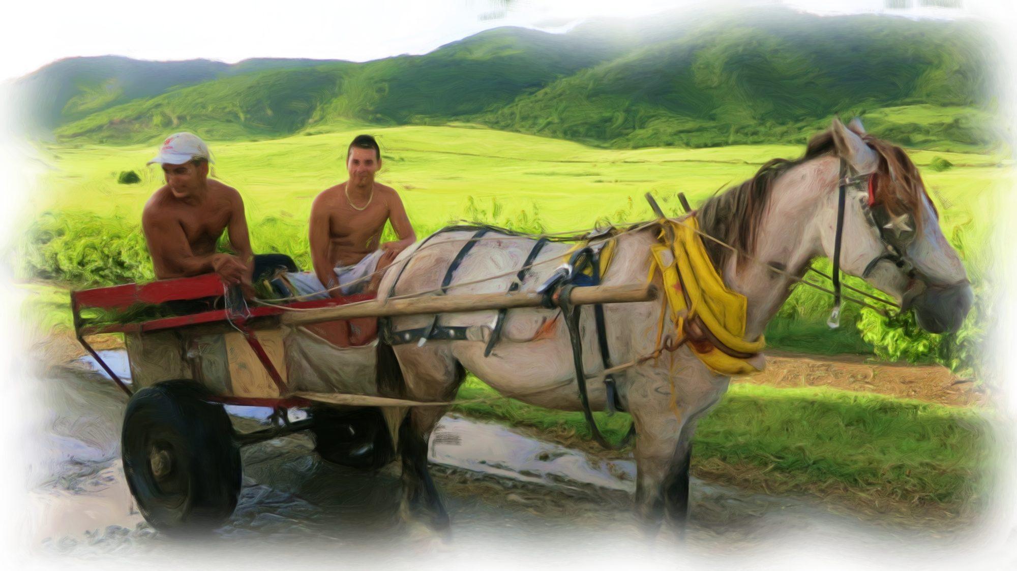 Cuban Horse and Cart