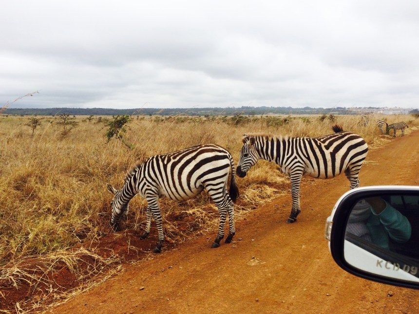 Zebra's in Kenia Nairobi National Park