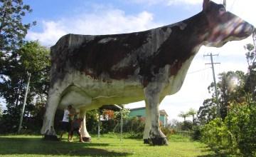 The Big Cow Queensland Australië