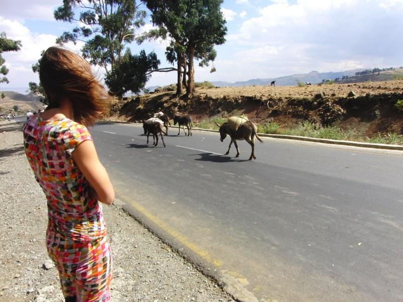 Ethiopië verkeer ezels