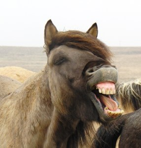 IJsland IJslander paard paardrijden