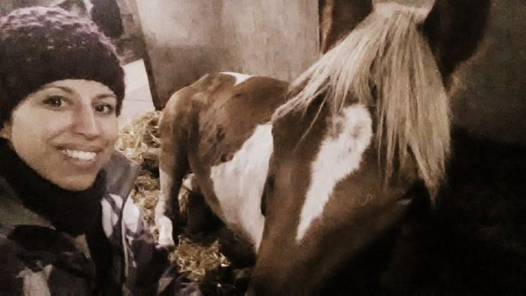 pony slapen in stal