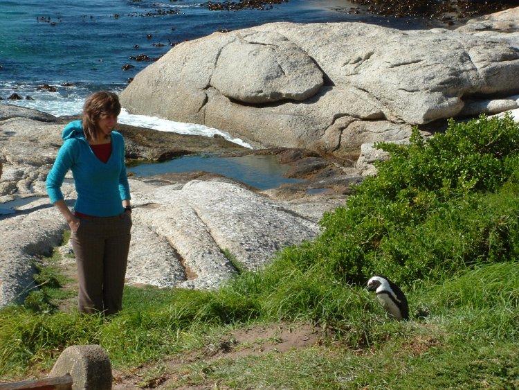 Kaapstad naar Johannesburg zuid afrika boulders beack pinguïns