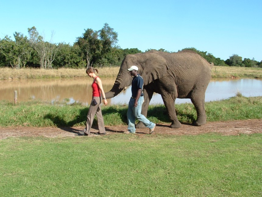 elephant-sanctuary-knysna-3 olifant zuid afrika