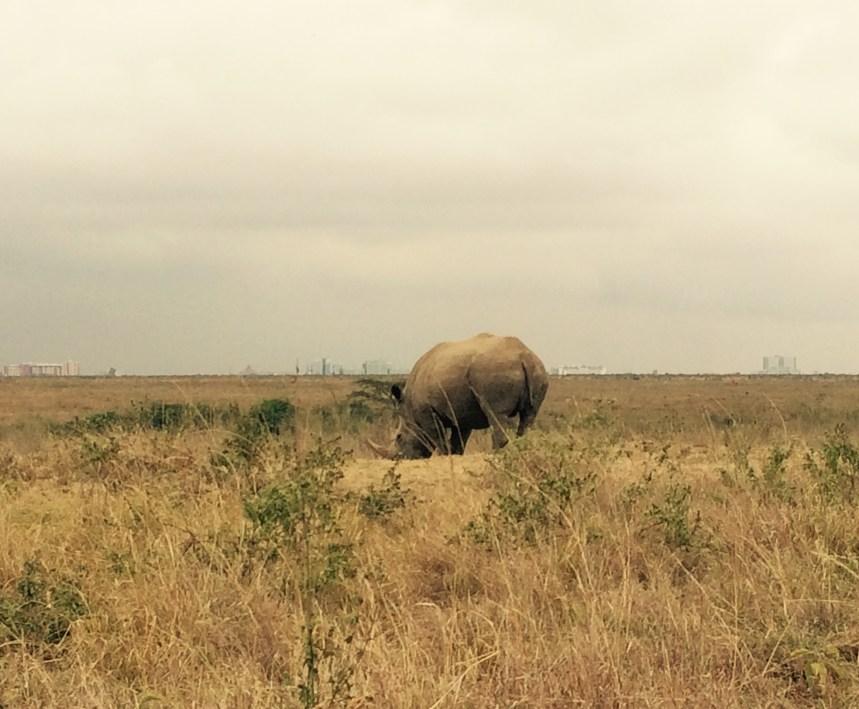 Neushoorn Nairobi National Park Kenia