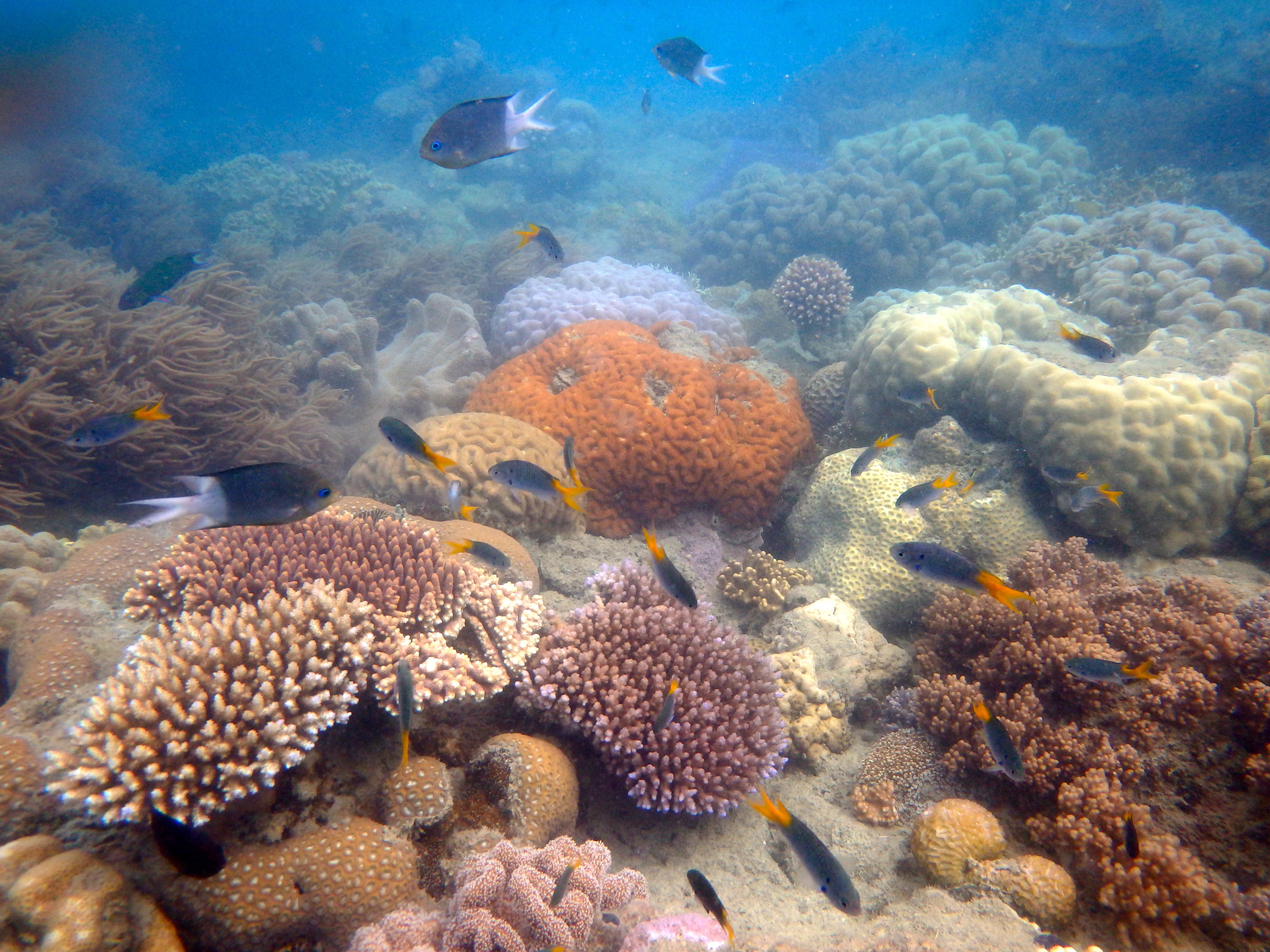 Zeilen op het Great Barrier Reef – Australië