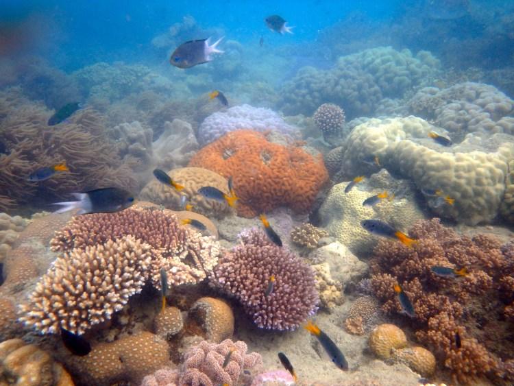 onder water great barrier reef Australië