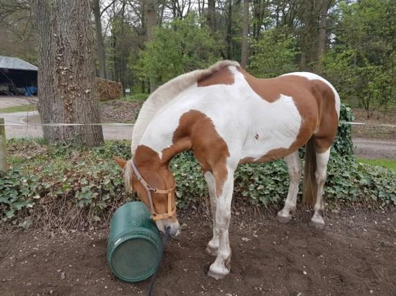 paarden springen voerton