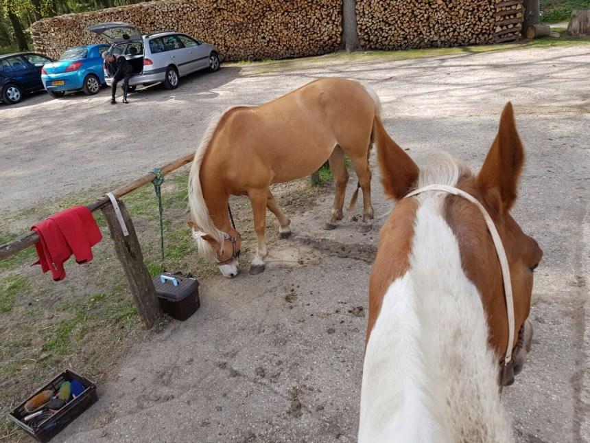 Paardrijden wachten op stal