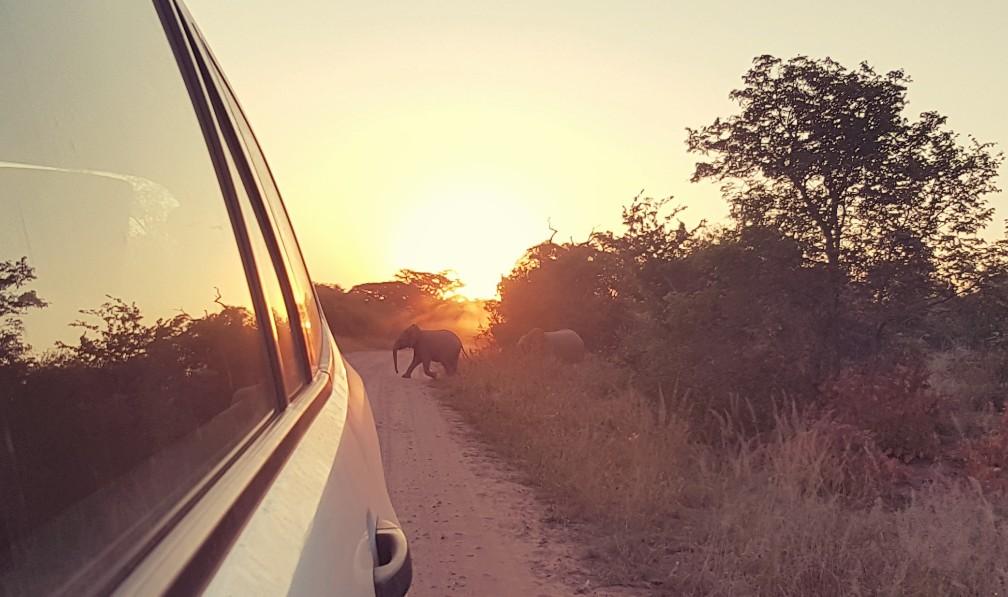 Kruger National Park olifant op brug Zuid Afrika