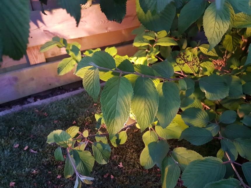 Tuinverlichting deel 1