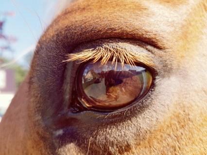 paardenoog weerspiegeling