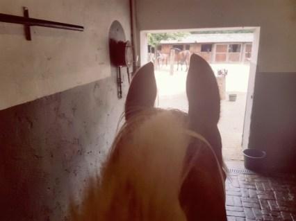pony wegen op weegschaal