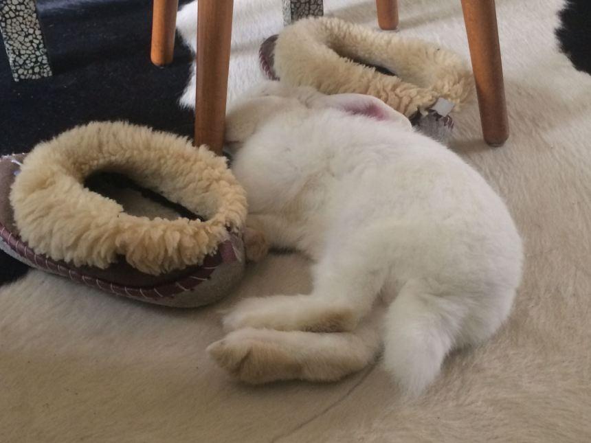 konijn slaapt op vloerkleed