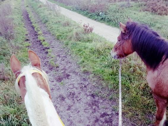 handpaard, paard aan de hand mee het bos in